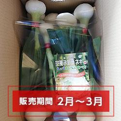 空飛ぶ新玉ネギ【葉付A】20玉