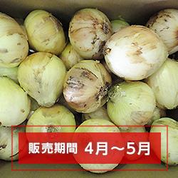 新玉ネギ【切玉】(徳用)中サイズ(8〜9cm) 10kg