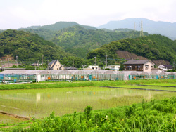 延岡淡水養魚場 あゆの渡辺
