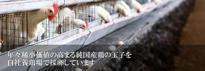年々稀小価値の高まる純国産鶏の玉子を自社養鶏場で採卵しています