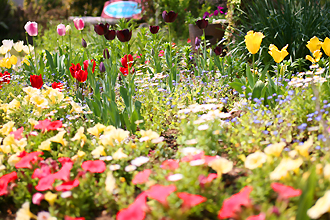 花と緑の基地では年間20万本の花苗を育苗しています