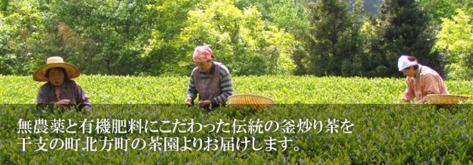 無農薬と有機肥料にこだわった伝統の釜炒り茶を干支の町北方町の茶園よりお届けします。