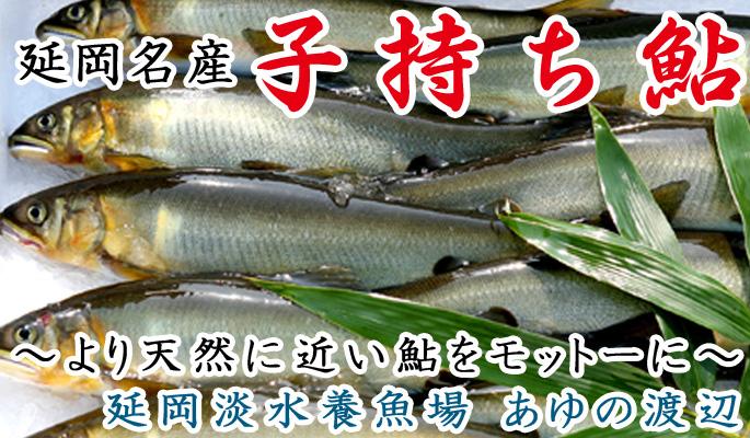 鮎の画像 p1_16