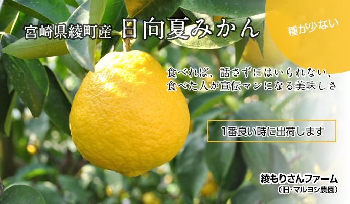 宮崎県綾町産 日向夏みかん マルヨシ農園
