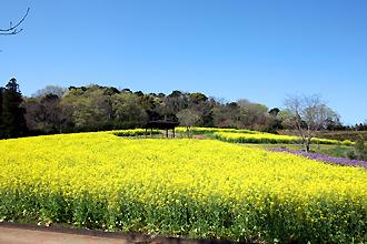 大型花壇では四季折々の花が楽しめます