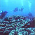 オオスリバチ珊瑚礁