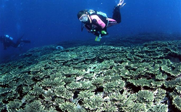 オオスリバチサンゴ礁