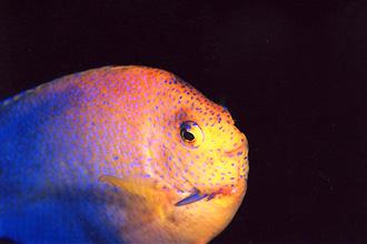 延岡の海の中の魚