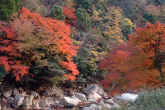 鹿川渓谷の秋