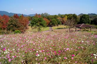 秋の植物園 全景