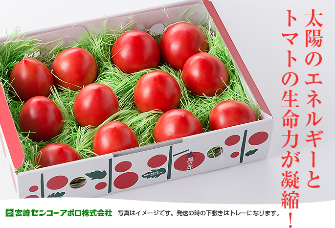 太陽のエネルギーと トマトの生命力が凝縮!