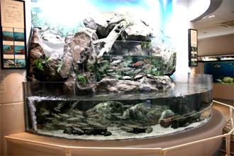 須美江家族旅行村 「すみえファミリー水族館」 150種類、約800匹が展示されています