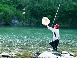 五ヶ瀬川の鮎釣り