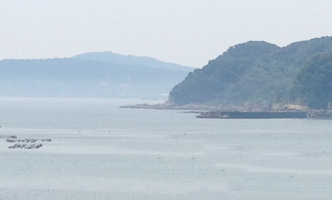 yuyu-fish02.jpg